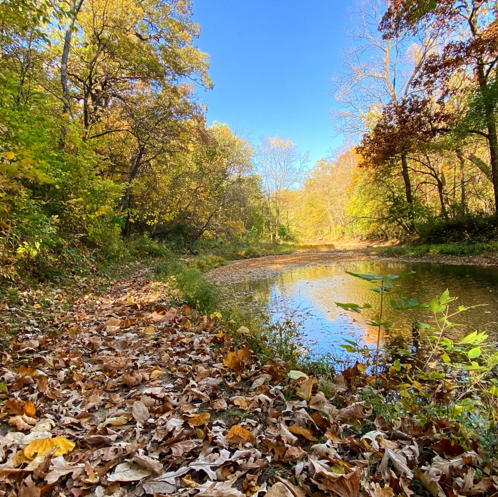 hiking trail covered in fall leaves along the left side of a creek