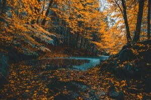 Trees with golden fall leaves frame river