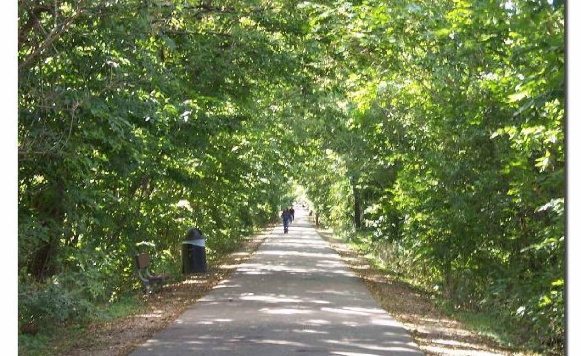 Wide paved trail surrounded by lush green trees