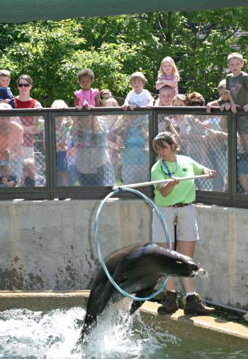Woman wearing a green shirt holding a stick with a hoop as a sea lion jumps through the hoop